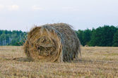 One haystack in meadow grass — Stock Photo