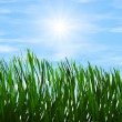 Bright green grass on a blue sky sunbeam backgrounds — Stock Photo