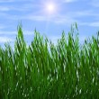 Bright green grass on a blue sky sunbeam backgrounds — Stock Photo #38611701