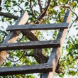 Accommodation ladder to fruit tree in green garden — Stock Photo #39469505