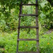 Accommodation ladder to fruit tree in green garden — Stock Photo #39469589