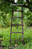 Accommodation ladder to fruit tree in green garden — Stock Photo