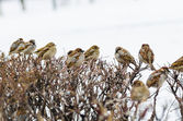 Shelter of small defenceless sparrow birds family. Wildlife scen — Stock Photo