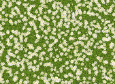 Many white open flowers in a green grass backgrounds — Stock Photo