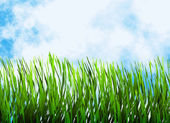 Bright green grass on a blue sky backgrounds — Foto Stock