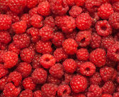 Many red succulent raspberries backgrounds — Stock Photo