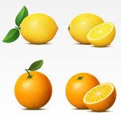 Collectie van vruchten — Stockvector