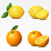 Collection of fruits — Vector de stock