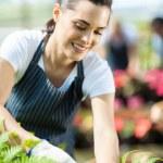 Pretty female gardener working inside greenhouse — Stock Photo