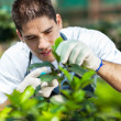 Foto Stock: Young male gardener working in greenhouse