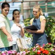 Happy couple shopping for plants in greenhouse — Stockfoto