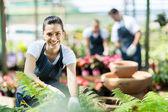 Gelukkig vrouwelijke kwekerij werknemer trimmen planten in kas — Stockfoto