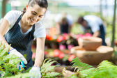 Beautiful female nursery worker working in greenhouse — Stock Photo