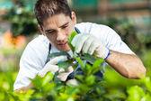 Jeune mâle jardinier travaillant en serre — Photo