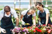Grup genç bahçıvanlar sera içinde çalışma — Stok fotoğraf