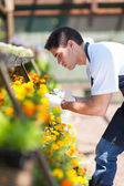 Male florist working inside nursery — Stock Photo