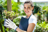 Happy female nursery worker in greenhouse — Stock fotografie