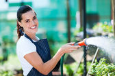 Pretty florist watering flowers in greenhouse — Stock Photo