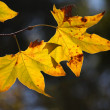 Autumn leaves — Stock Photo #14970895