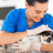 Vet comforting sick dog — Stock Photo #22722919