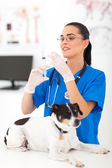 Veterinary assistant preparing to inject pet dog — Stok fotoğraf