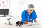 Veteriner sağlık kontrolü sonra rapor yazma — Stok fotoğraf