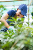 African american female nursery worker trimming plants — Stock Photo