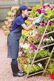 Nursery worker trimming flowers — Stock Photo