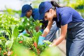 Female nursery worker trimming plants — Stock Photo