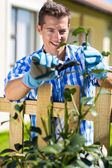 Man pruning shrub branch — Stockfoto