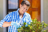 Man pruning a shrub — Stock Photo