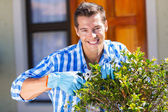 Man trimming a shrub — Stock Photo