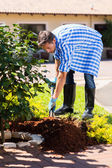Man planting a shrub in garden — Stock Photo
