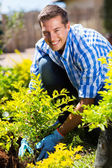 Man planting shrub in garden — Stock Photo