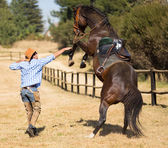 Cowboy trying to control his horse — Stock Photo