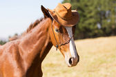 Horse wearing a cowboy hat — Stock Photo