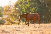 Farm häst — Stockfoto