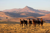 Wild horse herd — Stock Photo