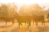 Horse herd on ranch — Stock Photo