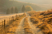 Autumn rural path — Stock Photo