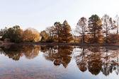 Calm autumn lake — Stock Photo