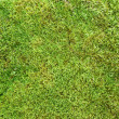 Green moss background texture — Photo