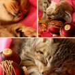 Stock Photo: Xmas kitten collage