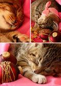 Xmas kitten collage — Stock Photo