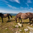 Постер, плакат: Two horses on the meadow