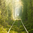 Green tunnel. - Stock Photo