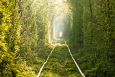 Green tunnel. — Stock Photo
