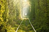 Green tunnel. — Stock Photo