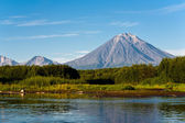 Volcano Koryaksy and river Avacha on Kamchatka. — Stock Photo