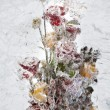 Frozen flowers. — Stock Photo